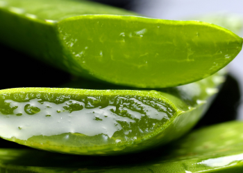 Aloe-vera-gel-plant---gezond10