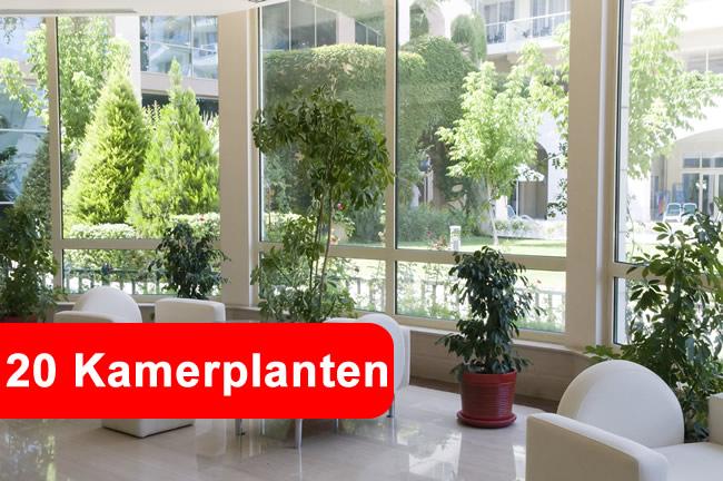 kamerplanten - gezond10