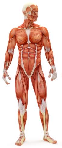 vertakte aminozuren bcaa spierpijn